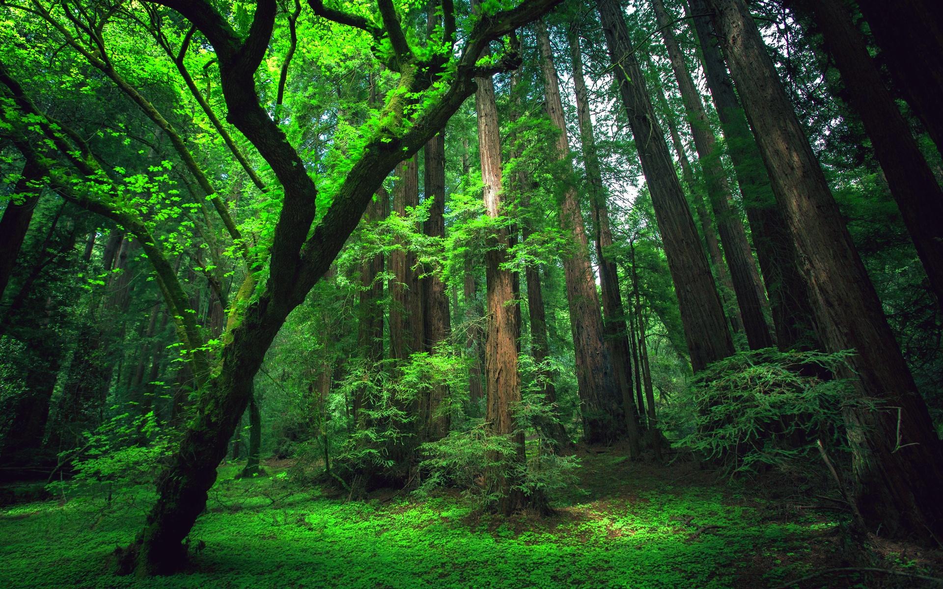 amazon nature wallpaper - photo #15