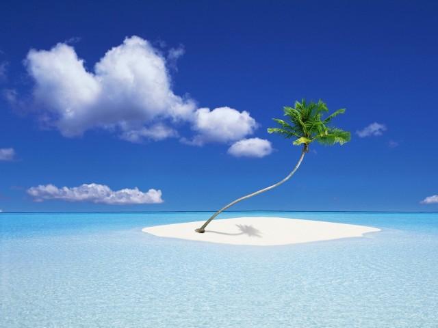 nature-islands-coco-palm