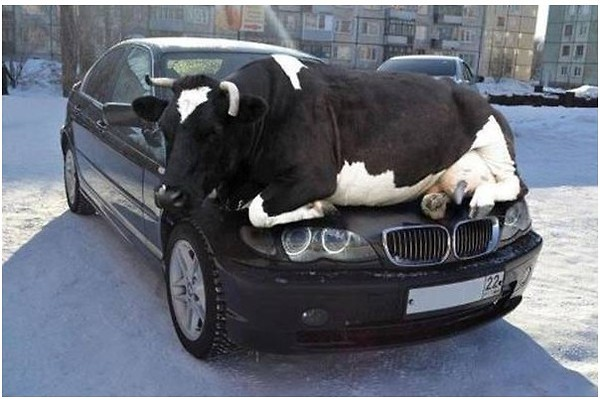 a.baa-car-warmer