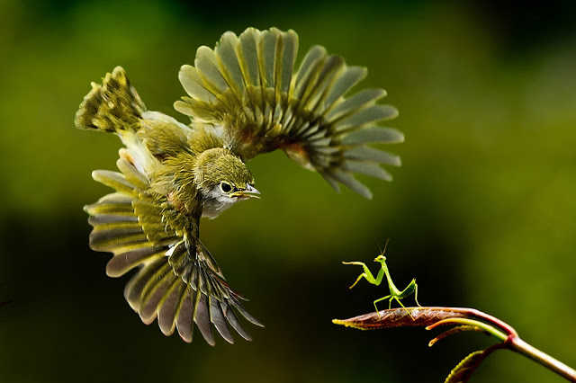 BirdMantis_zps3c2ba059