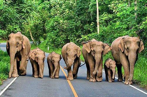 a.baa-un-gruppo-di-elefanti