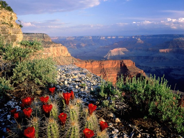 Grand-Canyon-National-Park-Arizona