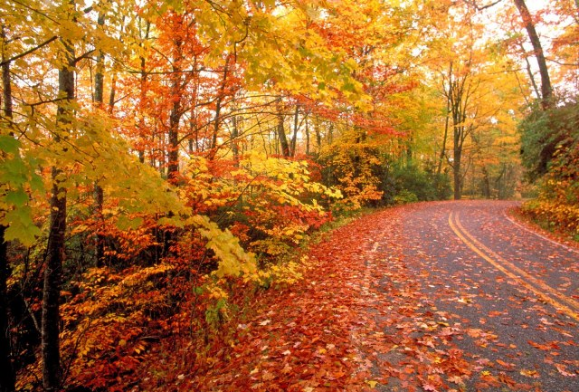 Fall road Smokies