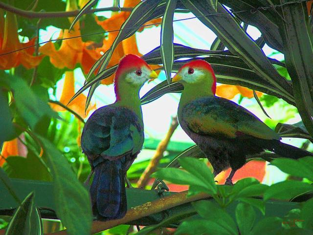 tropical-birds-wendy-mckennon