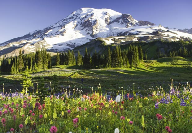 Wildflowers on Mount Rainier, Washington, Frommers Beautiful Mou