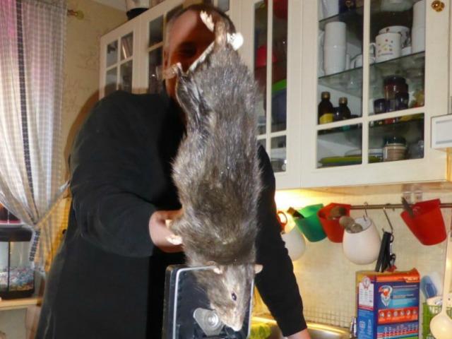 giant-dead-rat-AAAAAAAGH