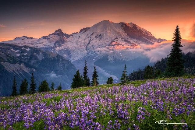 rainier-mountain-sunset-flowers-sunrise-1050