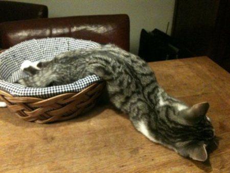 melting-cat