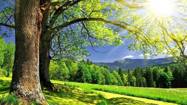 Sunny-Summer-Day-1920x1080